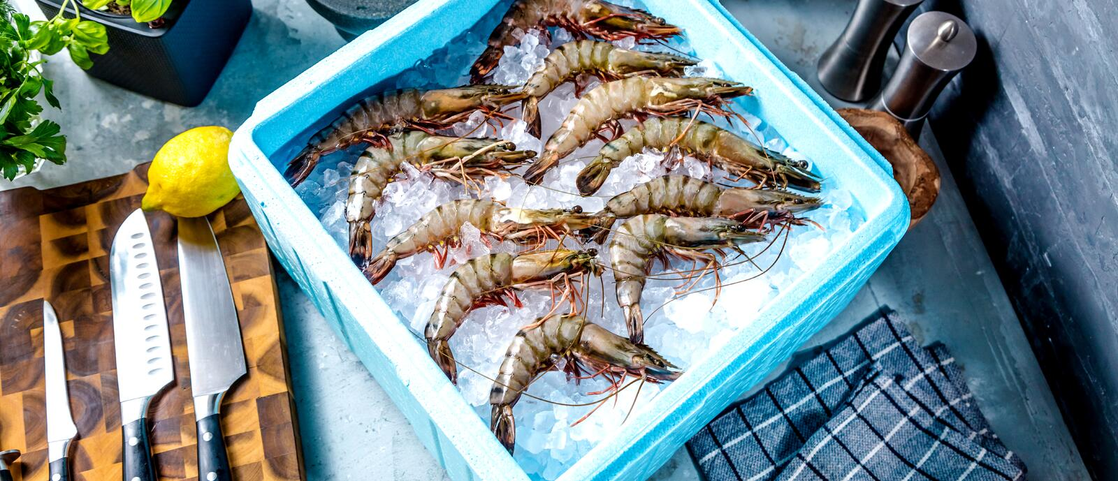 Prawn newly fished and stored in boxes with ice. Prawn newly fished and stored in blue box with ice stock photography