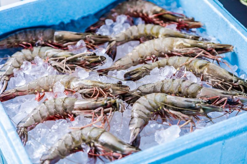 Prawn newly fished and stored in boxes with ice. Prawn newly fished and stored in blue box with ice royalty free stock photo