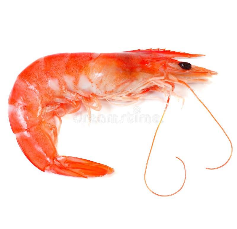 Free Prawn Shrimp Stock Images - 11692634