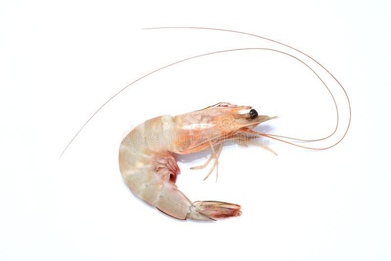 Download Prawn shrimp stock photo. Image of market, straw, prawn - 12210086