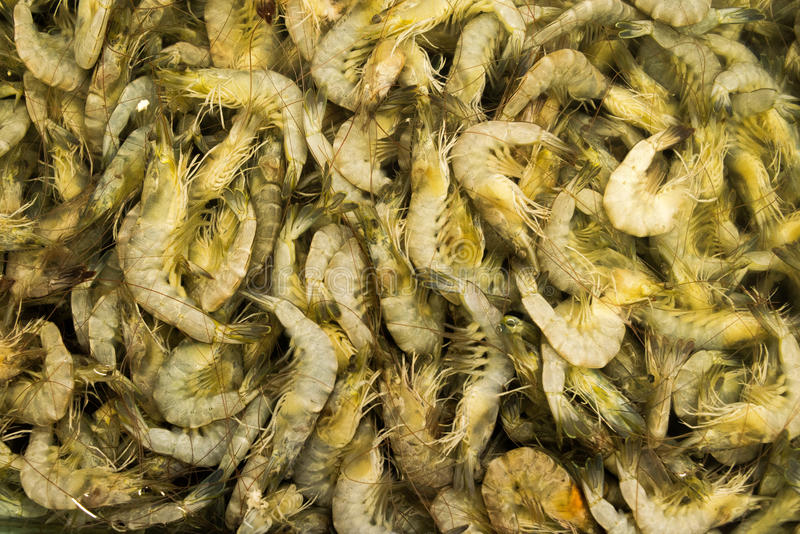 Prawns for food royalty free stock images