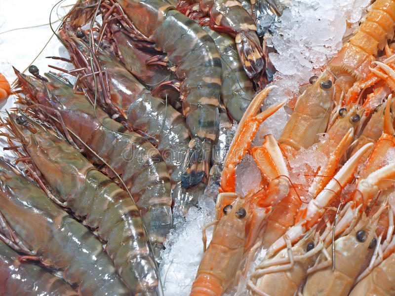 Prawns for Sale royalty free stock images