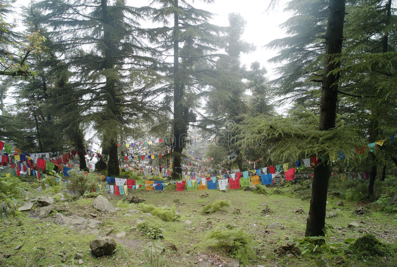 Download Prayer flags stock image. Image of tree, himalaya, flag - 7687015