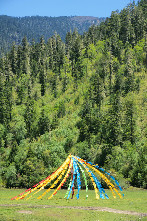 Prayer flags. The tibetan prayer flags in mountain forest royalty free stock images
