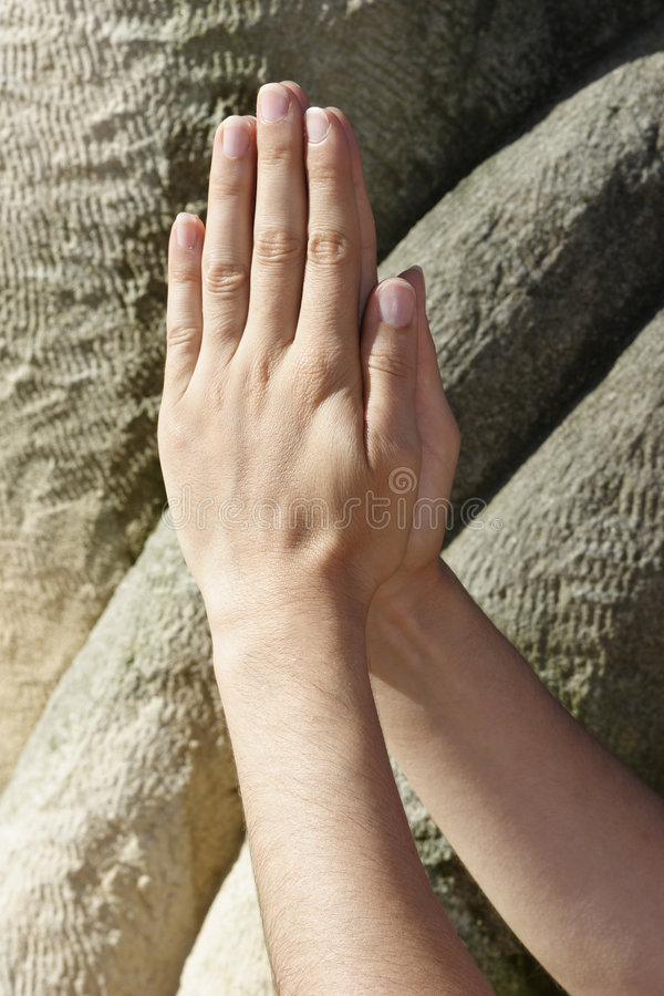 Prayer hands royalty free stock images