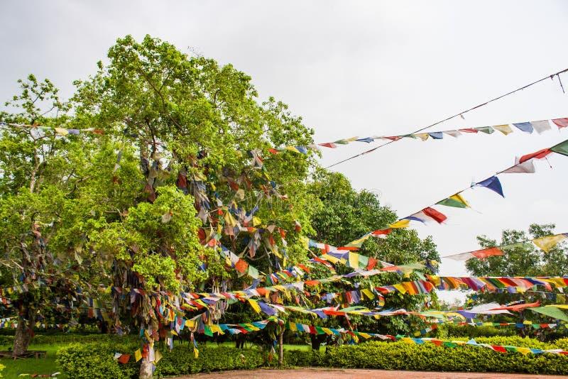 Prayers flags in Lumbini, Nepal. Prayers flags with buddhist mantras in Lumbini, Nepal royalty free stock photos