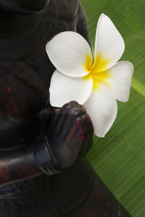 Free Praying Buddha Royalty Free Stock Photography - 11897047