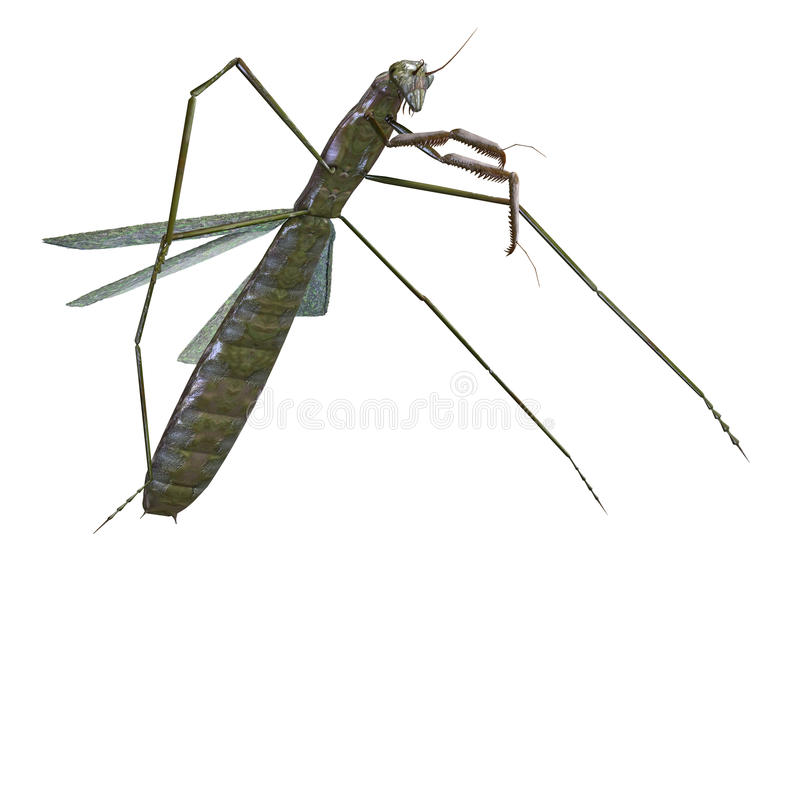 Download Praying mantis stock illustration. Image of horrible - 11234173