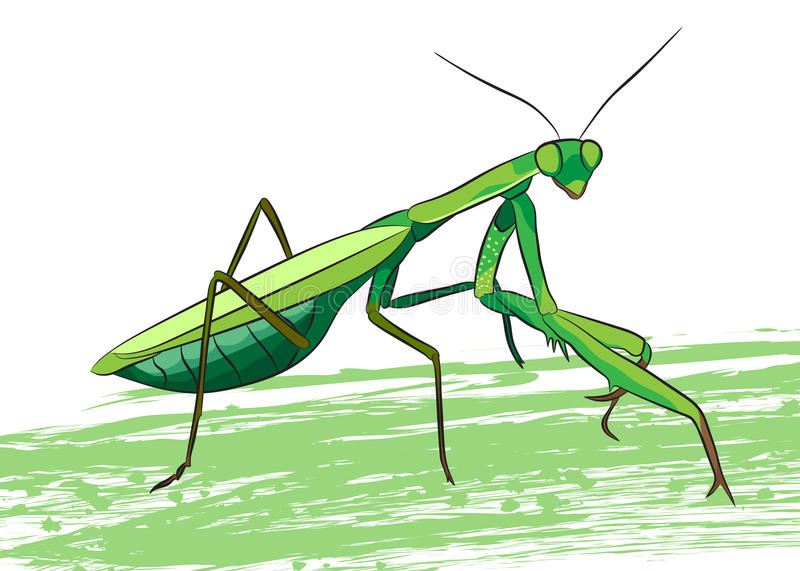 Praying mantis. Funny vector illustration. T-shirt design vector illustration