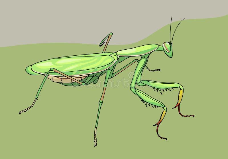 Praying mantis, hand drawn illustration royalty free illustration