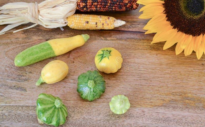 Pre-harvest vertoning van de babypompoen royalty-vrije stock afbeeldingen