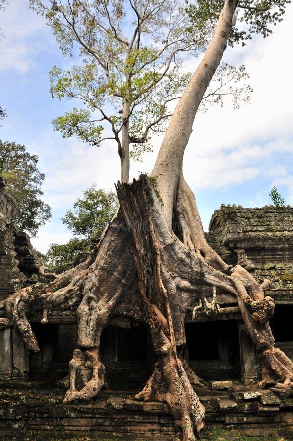 Download Preah Khan in Angkor Wat stock afbeelding. Afbeelding bestaande uit china - 29501929