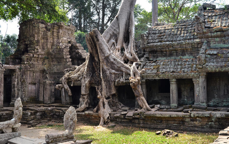 Preah khan Cambodge images stock