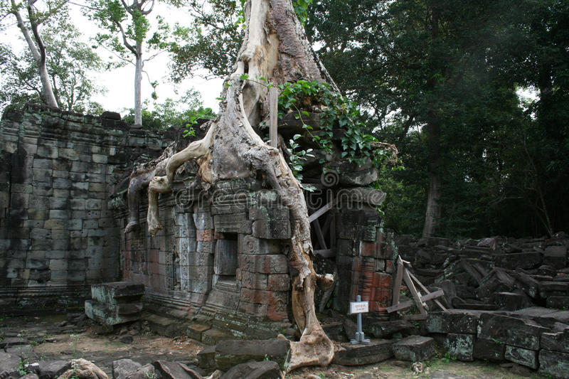 Preah khan ruins. The ruins of the ancient khmer temple of preah khan in the jungle of angkor in cambodia stock photography