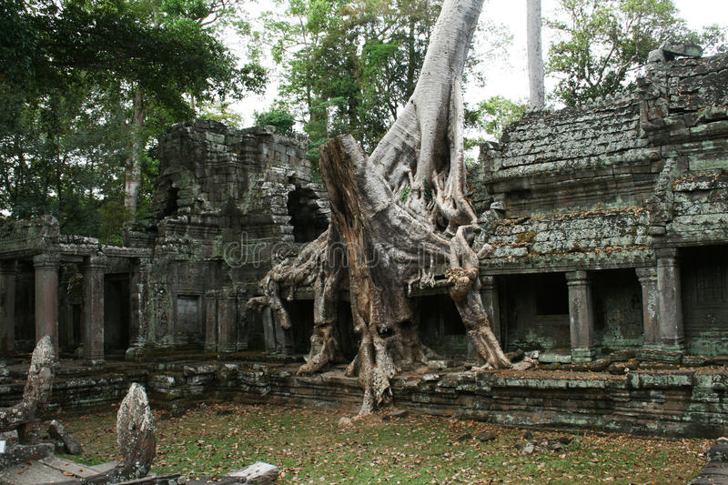 Preah khan ruins. The ruins of the preah khan temple in the jungle of angkor in cambodia royalty free stock photography
