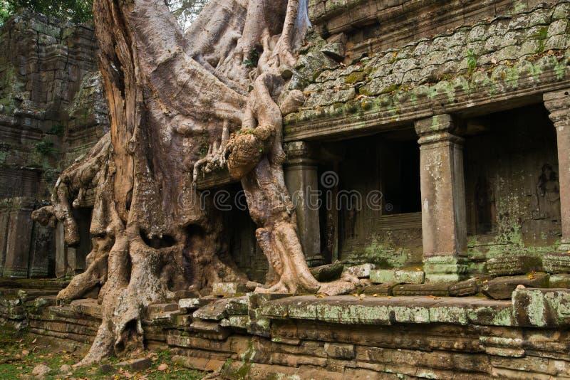 Preah Khan tempel arkivfoton