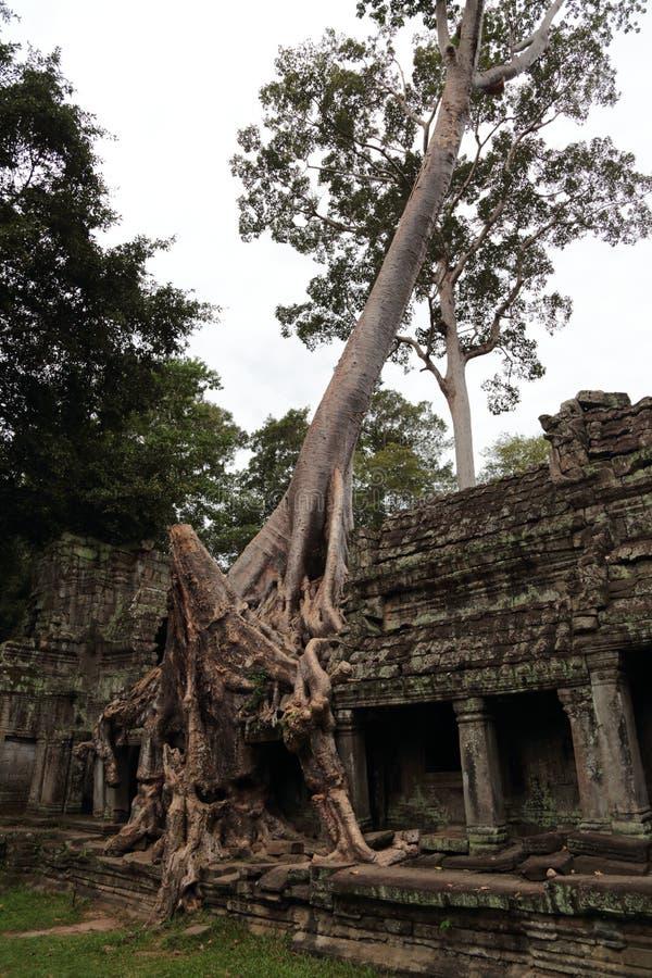Preah Khan temple in Angkor. Preah Khan temple at Angkor, Cambodia royalty free stock photography