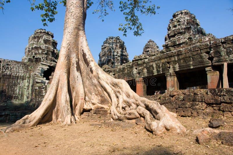 Preah Khan Temple, Cambodia. Big Tree at Preah Khan Temple, Cambodia royalty free stock photos