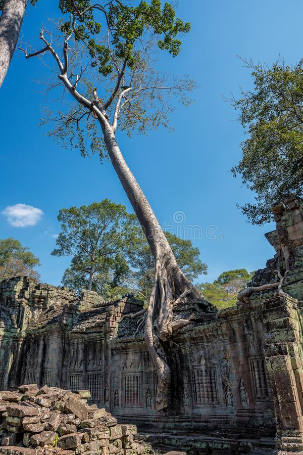 Preah Khan temple in complex Angkor Wat in Siem Reap, Cambodia stock images