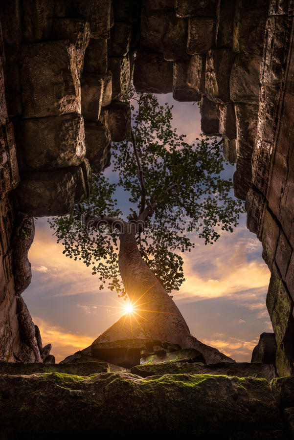Preah Khan. A tree grows up through the roof of the temple at Preah Khan in Siem Reap, Cambodia stock photos