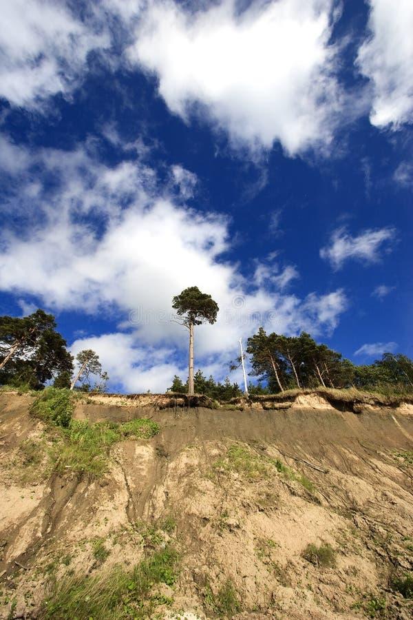 Precipice with pine-tree royalty free stock image