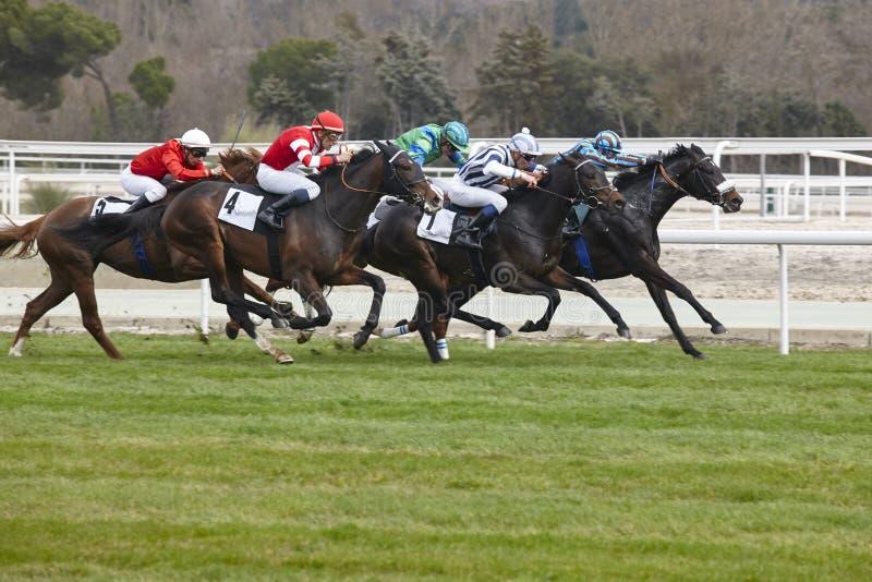 Precipitação final da corrida de cavalos Esporte da competição hippodrome vencedor Sp imagem de stock royalty free
