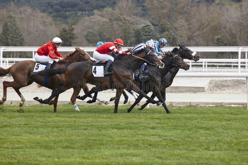 Precipitación final de la carrera de caballos Deporte de la competencia hippodrome Ganador foto de archivo libre de regalías