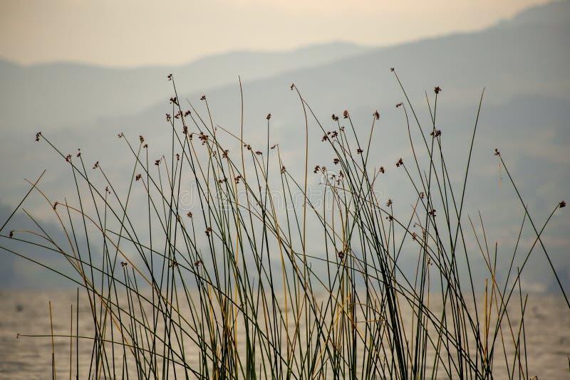 Precipitaciones en el borde del lago Tota imagen de archivo libre de regalías