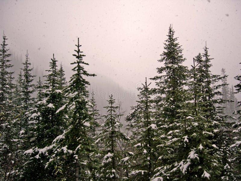 Precipitazioni nevose 1 immagine stock