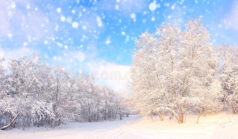 Precipitazioni nevose di Natale in parco fotografia stock libera da diritti