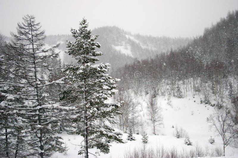 Precipitazioni nevose in montagna. L'isola Sakhalin. immagine stock libera da diritti