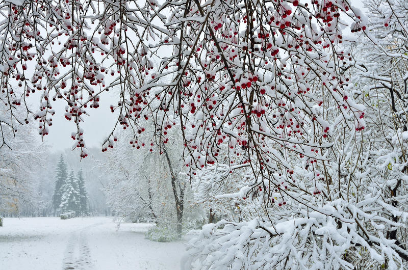 Precipitazioni nevose nel fondo di inverno del parco della città fotografie stock libere da diritti