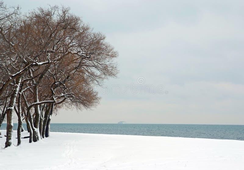 Precipitazioni nevose nella foresta costiera del mare fotografia stock