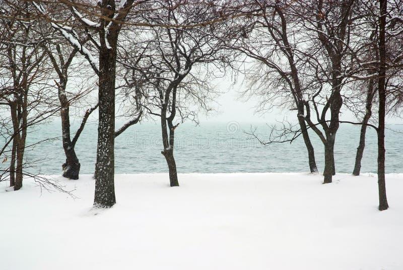 Precipitazioni nevose nella foresta costiera del mare fotografia stock libera da diritti