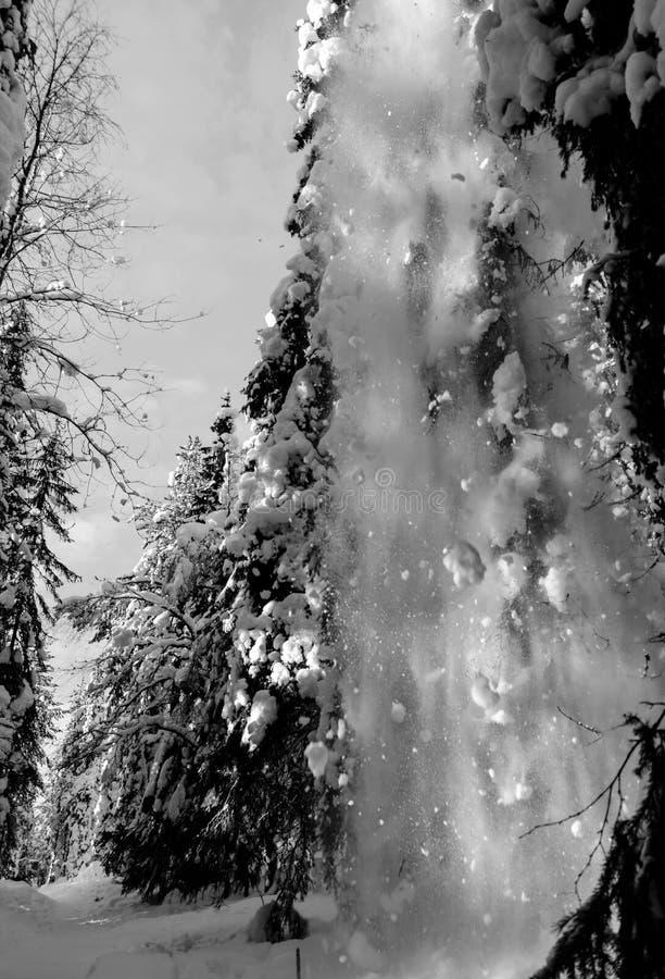 Precipitazioni nevose nella foresta - Lapponia - finlandia fotografia stock