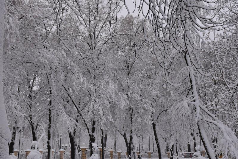 Precipitazioni nevose pesanti nell'inverno immagini stock libere da diritti