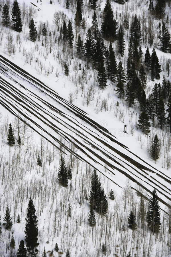 Precipitazioni nevose sulla strada con gli alberi. fotografia stock libera da diritti