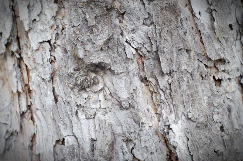 Precis skäll på ett träd Härlig strukturell yttersida av skället på arkivbild