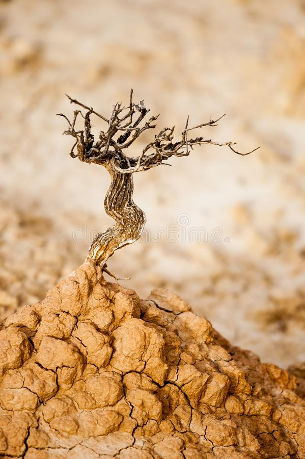 Precis som ett tondödträd överst av en kulle för torr jord royaltyfria foton