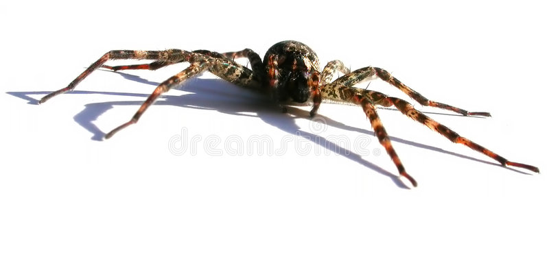 Download Predator stock photo. Image of arachnid, spider, scary, arachnophobia - 7486