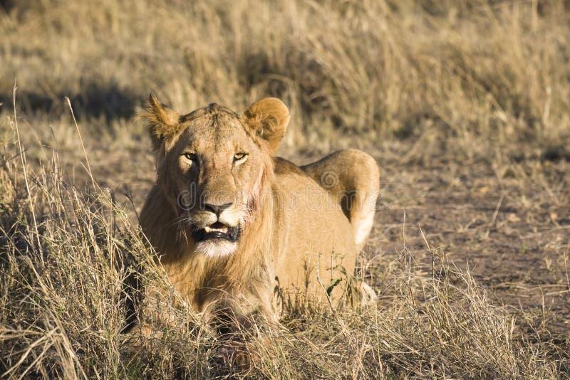 Download Predator Stock Photo - Image: 3440590