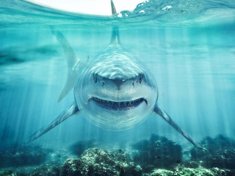 Ocean clipart waterline, Ocean waterline Transparent FREE for download on  WebStockReview 2020