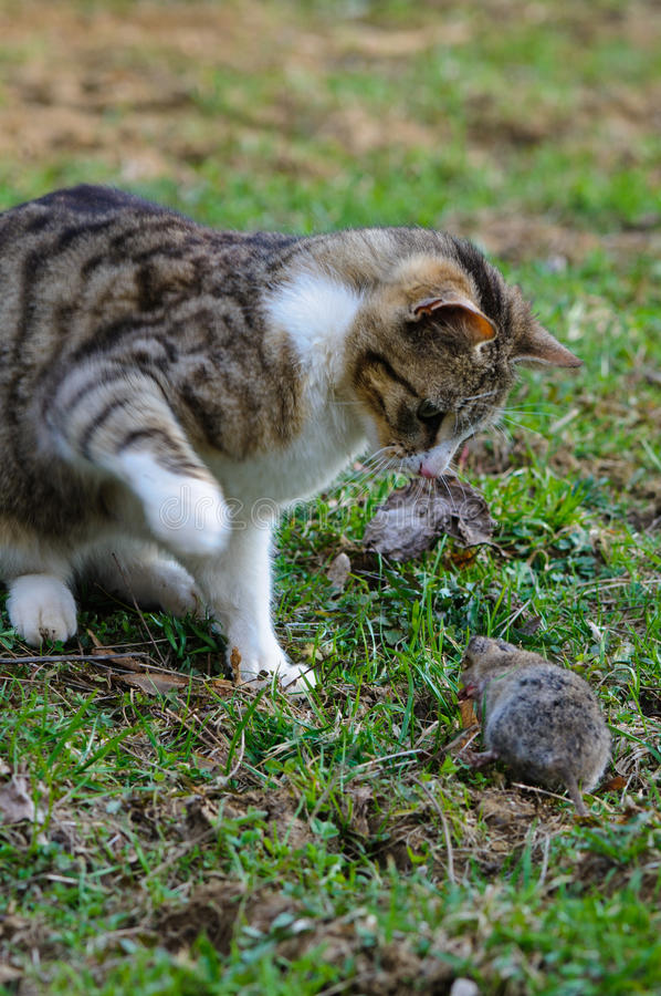 Download Predator and prey stock photo. Image of beauty, nature - 31079514