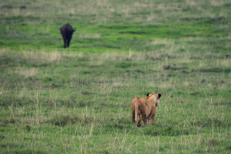Predator and prey stock photography