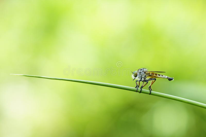 Predators. Or Insect pest or Parasite royalty free stock photo