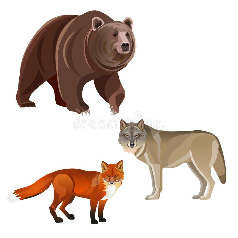 Predatory beasts vector. Predatory beasts - brown bear, gray wolf and red fox. Vector illustration on white background stock illustration