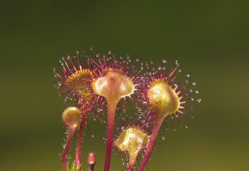 Predatory blommor royaltyfri fotografi