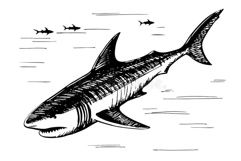 Shark sketch freehand drawing royalty free illustration