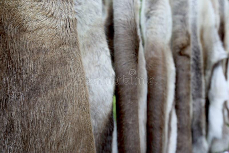 Preens?o das peles dos cervos fotos de stock