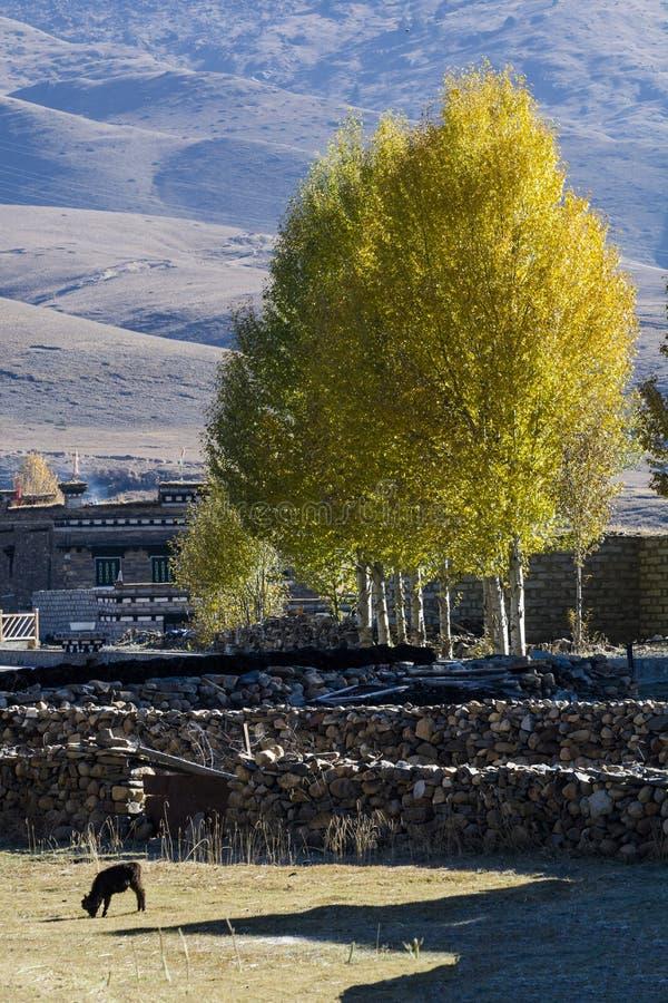 Prefectura del Aba en la provincia de Sichuan, montaña de cuatro muchachas imágenes de archivo libres de regalías